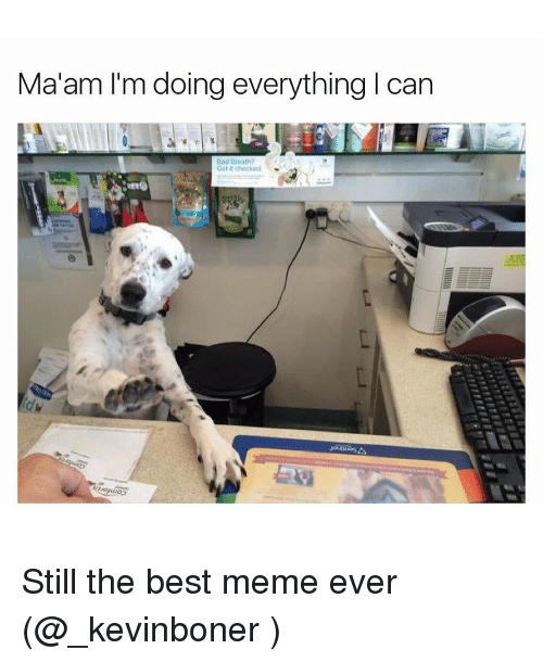 Funny, Meme, and Bests: Ma'am I'm doing everything l can Still the best meme ever (@_kevinboner )