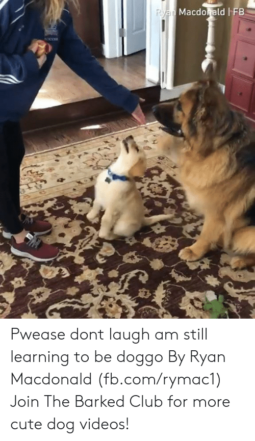 dog videos: Macdorald FB Pwease dont laugh am still learning to be doggo By Ryan Macdonald (fb.com/rymac1)  Join The Barked Club for more cute dog videos!