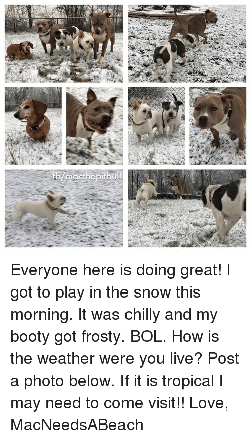 Memes, The Weather, and 🤖: mact he pit bu Everyone here is doing great! I got to play in the snow this morning. It was chilly and my booty got frosty. BOL. How is the weather were you live? Post a photo below. If it is tropical I may need to come visit!!   Love, MacNeedsABeach