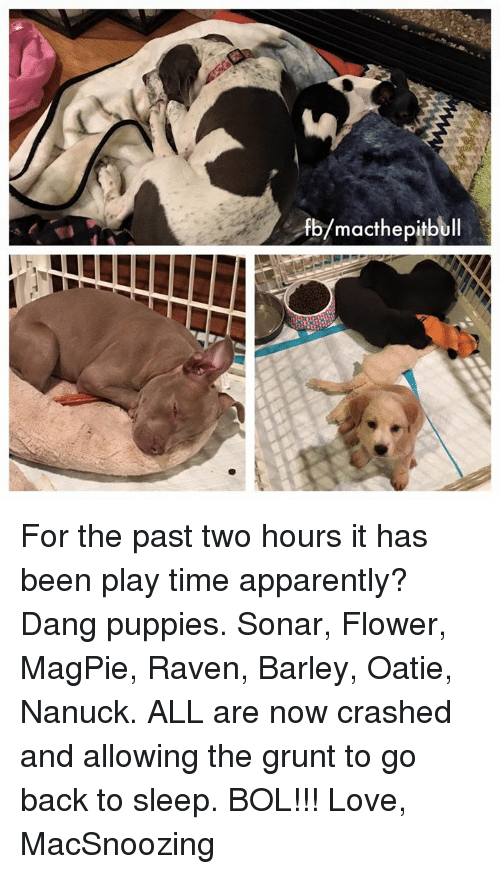 ravenous: macthepitb For the past two hours it has been play time apparently? Dang puppies. Sonar, Flower, MagPie, Raven, Barley, Oatie, Nanuck. ALL are now crashed and allowing the grunt to go back to sleep. BOL!!!   Love, MacSnoozing