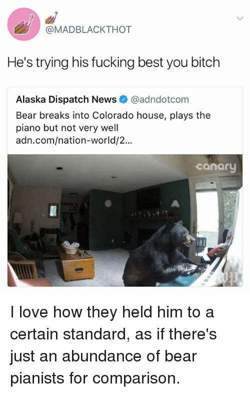 Bitch, Fucking, and Love: @MADBLACKTHOT  He's trying his fucking best you bitch  Alaska Dispatch News @adndotcom  Bear breaks into Colorado house, plays the  piano but not very well  adn.com/nation-world/2...  canary I love how they held him to a certain standard, as if there's just an abundance of bear pianists for comparison.