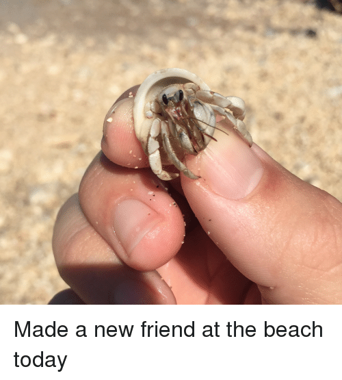 Beach, Today, and The Beach: Made a new friend at the beach today