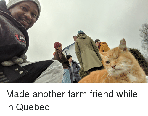 quebec: Made another farm friend while in Quebec