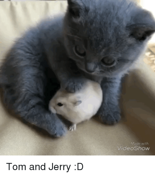Tom and Jerry: Made with  VideoShow Tom and Jerry :D
