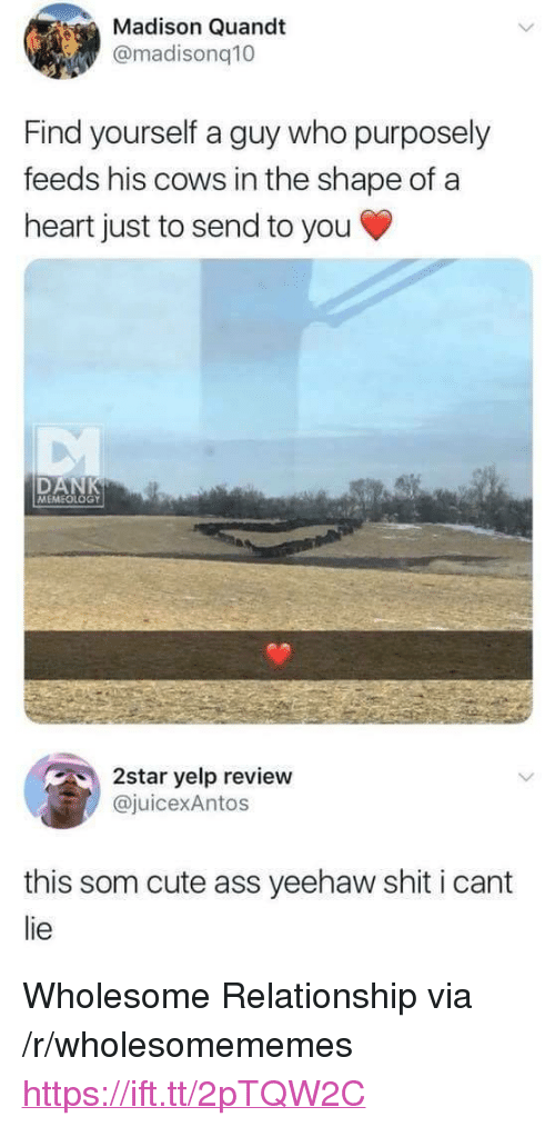"""I Cant Lie: Madison Quandt  @madisonq10  Find yourself a guy who purposely  feeds his cows in the shape of a  heart just to send to you  DAN  MEMEOLOGY  2star yelp review  juicexAntos  this som cute ass yeehaw shit i cant  lie <p>Wholesome Relationship via /r/wholesomememes <a href=""""https://ift.tt/2pTQW2C"""">https://ift.tt/2pTQW2C</a></p>"""