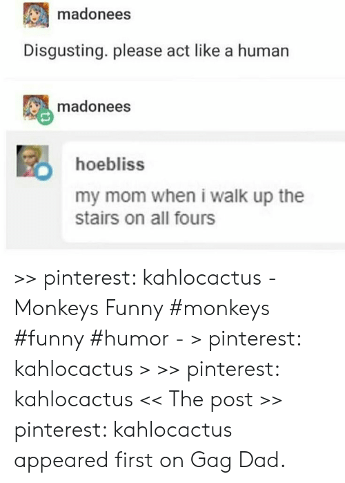 Pinterest: madonees  Disgusting. please act like a human  madonees  hoebliss  my mom when i walk up the  stairs on all fours >> pinterest: kahlocactus - Monkeys Funny #monkeys #funny #humor - > pinterest: kahlocactus > >> pinterest: kahlocactus << The post >> pinterest: kahlocactus appeared first on Gag Dad.