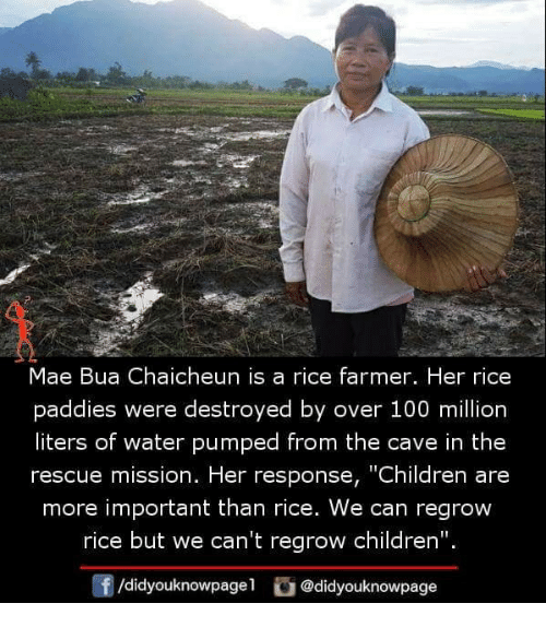 """Anaconda, Children, and Memes: Mae Bua Chaicheun is a rice farmer. Her rice  paddies were destroyed by over 100 million  liters of water pumped from the cave in the  rescue mission. Her response, """"Children are  more important than rice. We can regrow  rice but we can't regrow children"""".  f/didyouknowpagel@didyouknowpage"""