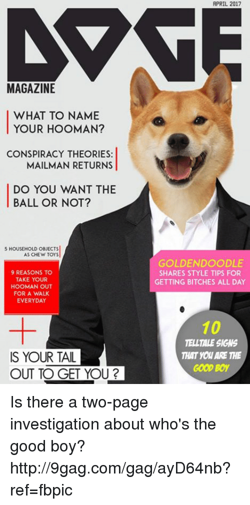 goldendoodle: MAGAZINE  WHAT TO NAME  YOUR HOOMAN?  CONSPIRACY THEORIES:  MAILMAN RETURNS  DO YOU WANT THE  BALL OR NOT?  S HOUSEHOLD OBJECTS  AS CHEW TOYS  9 REASONS TO  TAKE YOUR  HOOMAN OUT  FOR A WALK  EVERYDAY  IS YOUR TAIL  OUT TO GET YOU?  APRIL 2017  GOLDENDOODLE  SHARES STYLE TIPS FOR  GETTING BITCHES ALL DAY  10  TELLTALE SIGNS  THAT you ARE THE  GOOD Boy Is there a two-page investigation about who's the good boy? http://9gag.com/gag/ayD64nb?ref=fbpic