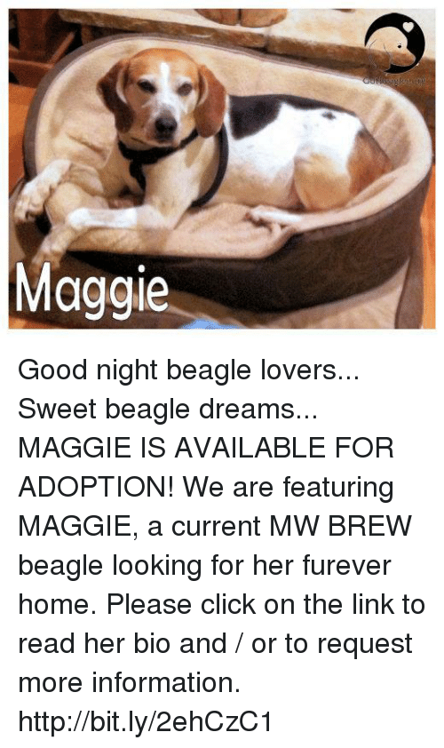 Click, Memes, and Good: Maggie Good night beagle lovers... Sweet beagle dreams...  MAGGIE IS AVAILABLE FOR ADOPTION!  We are featuring MAGGIE, a current MW BREW beagle looking for her furever home. Please click on the link to read her bio and / or to request more information. http://bit.ly/2ehCzC1