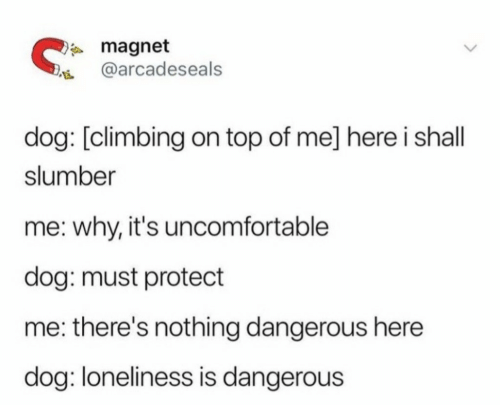 Climbing: magnet  @arcadeseals  dog: [climbing on top of me] here i shall  slumber  me: why, it's uncomfortable  dog: must protect  me: there's nothing dangerous here  dog: loneliness is dangerous