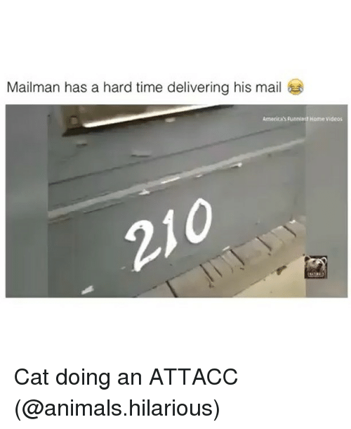 Animals, Funny, and Videos: Mailman has a hard time delivering his mail  America's funniedt Home videos  21 Cat doing an ATTACC (@animals.hilarious)
