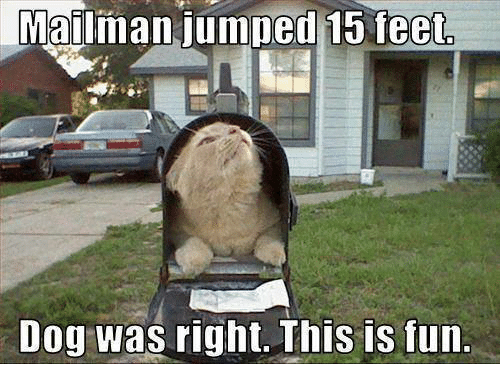 mailman-jumped-15-feet-dog-was-right-thi