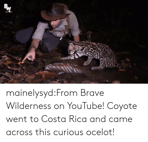 Costa Rica: mainelysyd:From Brave Wilderness on YouTube! Coyote went to Costa Rica and came across this curious ocelot!