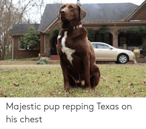 repping: Majestic pup repping Texas on his chest