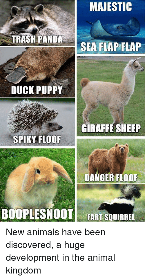 Animals, Anime, and Puppies: MAJESTIC  TRASH PANDA  SEA FLAP FLAP  DUCK PUPPY  GIRAFFE SHEEP  SPIKY FLOOF  DANGER FLOOF  BOCOPLESNOOT  FART SQUIRREL New animals have been discovered, a huge development in the animal kingdom