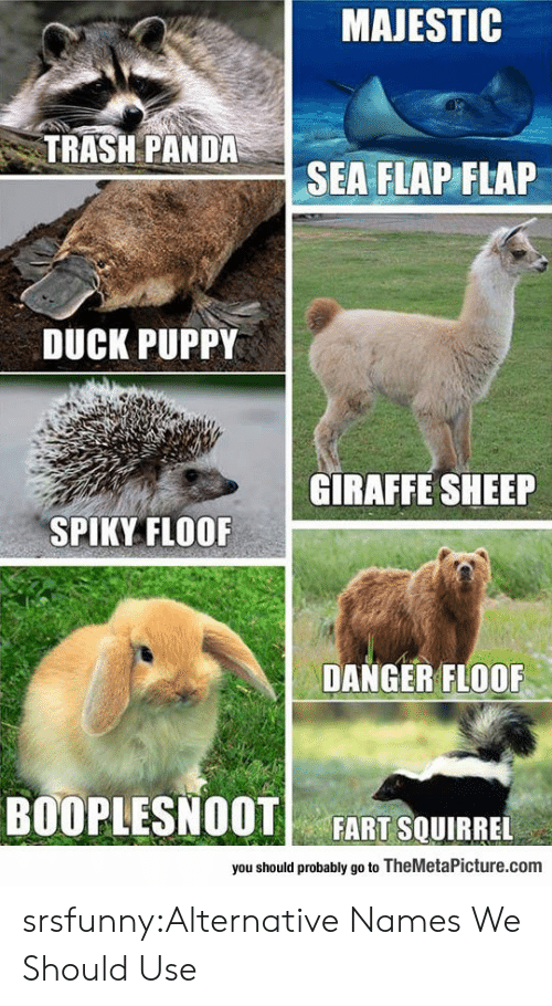 Trash Panda: MAJESTIC  TRASH PANDA  SEA FLAP FLAP  DUCK PUPPY  GIRAFFE SHEEP  SPIKY FLOOF  DANGER FLOOF  BOOPLESNOOT FART SQUIRREL  you should probably go to TheMetaPicture.com srsfunny:Alternative Names We Should Use