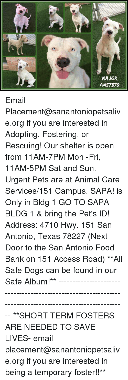Dogs, Food, and Memes: MAJOR  A457370 Email Placement@sanantoniopetsalive.org if you are interested in Adopting, Fostering, or Rescuing!  Our shelter is open from 11AM-7PM Mon -Fri, 11AM-5PM Sat and Sun.  Urgent Pets are at Animal Care Services/151 Campus. SAPA! is Only in Bldg 1 GO TO SAPA BLDG 1 & bring the Pet's ID! Address: 4710 Hwy. 151 San Antonio, Texas 78227 (Next Door to the San Antonio Food Bank on 151 Access Road)  **All Safe Dogs can be found in our Safe Album!** ---------------------------------------------------------------------------------------------------------- **SHORT TERM FOSTERS ARE NEEDED TO SAVE LIVES- email placement@sanantoniopetsalive.org if you are interested in being a temporary foster!!**