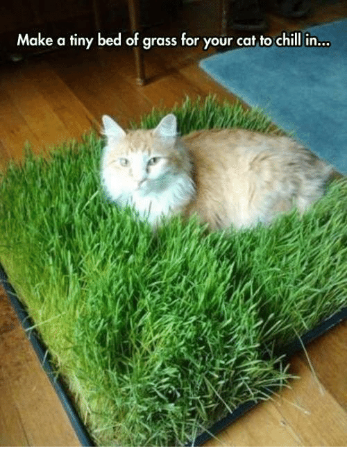 tinie: Make a tiny bed of grass for your cat to chill in...