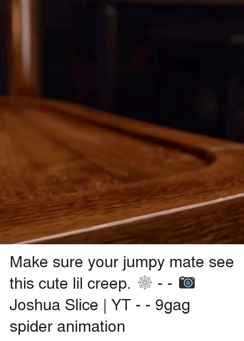 9gag, Cute, and Memes: Make sure your jumpy mate see this cute lil creep. 🕸 - - 📷Joshua Slice   YT - - 9gag spider animation