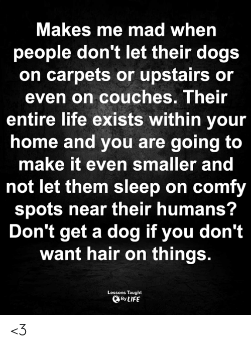 carpets: Makes me mad when  people don't let their dogs  on carpets or upstairs or  even on couches. Their  entire life exists within your  home and you are going to  make it even smaller and  not let them sleep on comfy  spots near their humans?  Don't get a dog if you don't  want hair on things.  Lessons Taught  By LIFE <3
