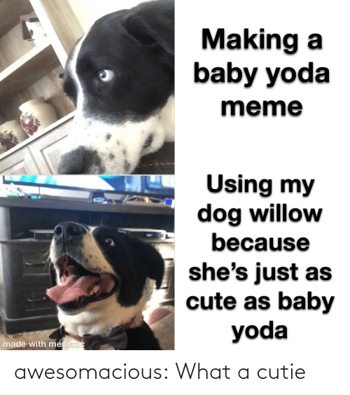 cutie: Making a  baby yoda  meme  Using my  dog willow  because  %24  she's just as  cute as baby  yoda  made with mematic awesomacious:  What a cutie
