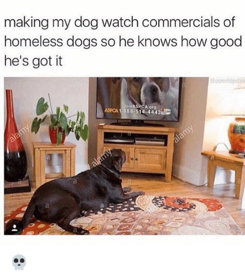 memes: making my dog watch commercials of  homeless dogs so he knows how good  he's got it  JoinAS  A org  1.888.514 4443EG 💀