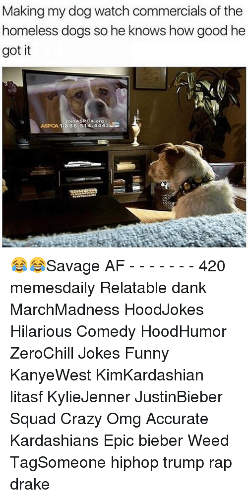 Memes, Aspca, and Savage Af: Making my dog watch commercials of the  homeless dogs so he knows how good he  got it  ASPCA 1 888-514 4443EG 😂😂Savage AF - - - - - - - 420 memesdaily Relatable dank MarchMadness HoodJokes Hilarious Comedy HoodHumor ZeroChill Jokes Funny KanyeWest KimKardashian litasf KylieJenner JustinBieber Squad Crazy Omg Accurate Kardashians Epic bieber Weed TagSomeone hiphop trump rap drake