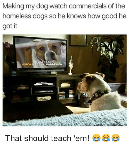 rca: Making my dog watch commercials of the  homeless dogs so he knows how good he  got it  RCA Org  ASPOA1 44433  1.888.514 That should teach 'em! 😂😂😂