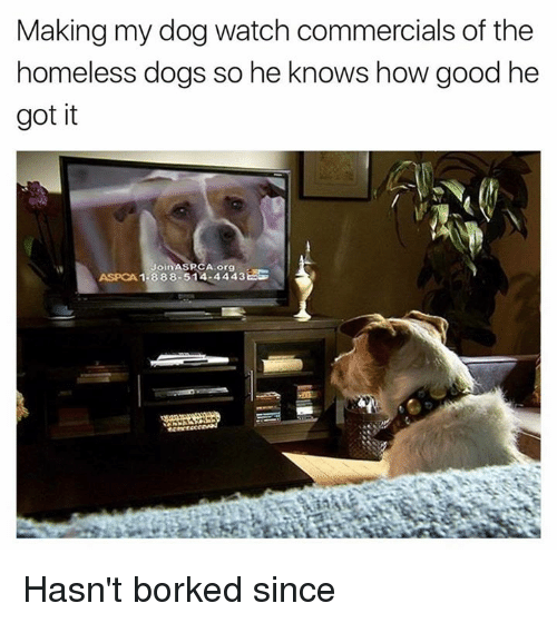 Aspca: Making my dog watch commercials of the  homeless dogs so he knows how good he  got it  Join ASRCA org  1-888-514-4443ES  ASPCA Hasn't borked since