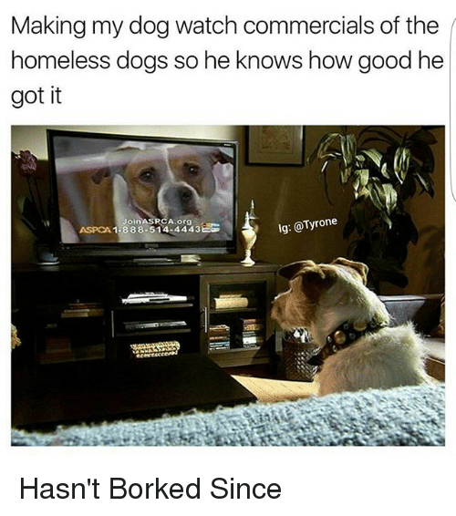 Aspca: Making my dog watch commercials of the  homeless dogs so he knows how good he  got it  lg: @Tyrone  Join ASRCA org  ASPCA 1-888-514 4443EE Hasn't Borked Since