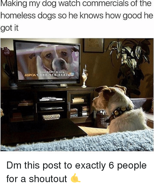 Dogs, Homeless, and Memes: Making my dog watch commercials of the  homeless dogs so he knows how good he  got it  ASPCA 1 -888-514-4443 Dm this post to exactly 6 people for a shoutout 🤙