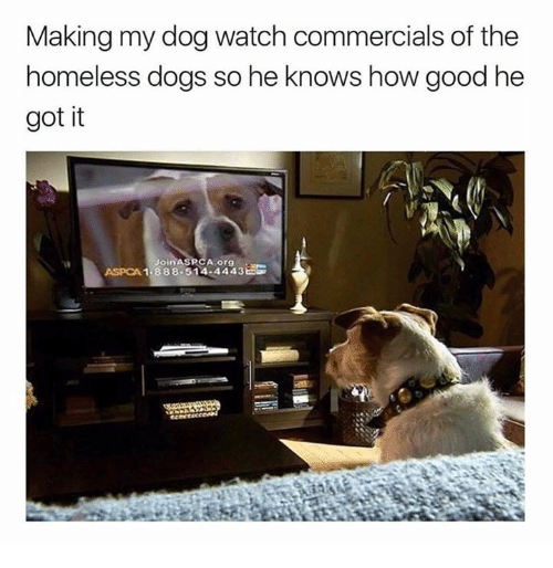 Aspca: Making my dog watch commercials of the  homeless dogs so he knows how good he  got it  А.org  ASPCA 1-888-514-4443Bs