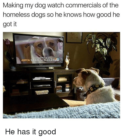 Aspca: Making my dog watch commercials of the  omeless doas So ne Knows how aood ne  got it  ASPCA 1-888-514-4443 He has it good