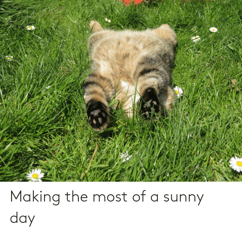 sunny: Making the most of a sunny day