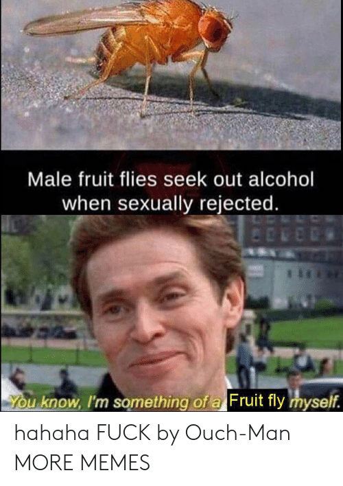 Flies: Male fruit flies seek out alcohol  when sexually rejected.  You know, I'm something of a Fruit fly myself. hahaha FUCK by Ouch-Man MORE MEMES