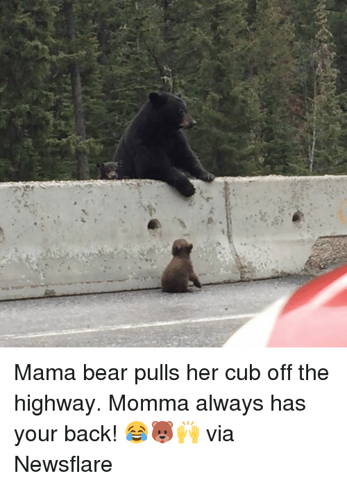 mama bear: Mama bear pulls her cub off the highway. Momma always has your back! 😂🐻🙌  via Newsflare