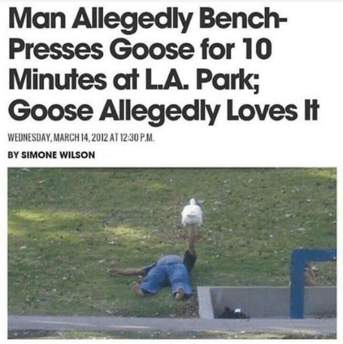 March 14: Man Allegedly Bench-  Presses Goose for 10  Minutes at LA. Park,  Goose Allegedly Loves It  WEDNESDAY, MARCH 14,2012 AT 12:30 P.M.  BY SIMONE WILSON