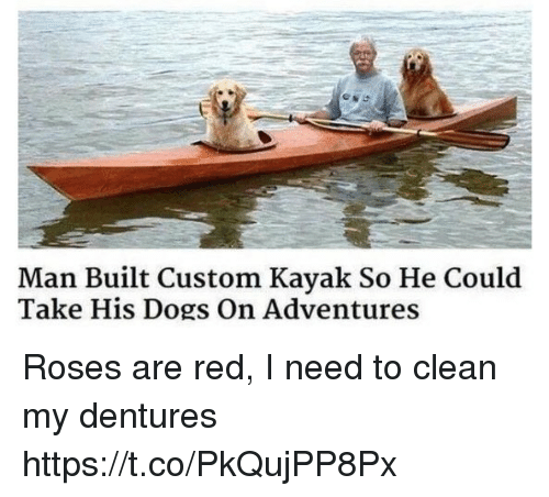Dogs, Memes, and Kayak: Man Built Custom Kayak So He Could  Take His Dogs On Adventures Roses are red, I need to clean my dentures https://t.co/PkQujPP8Px