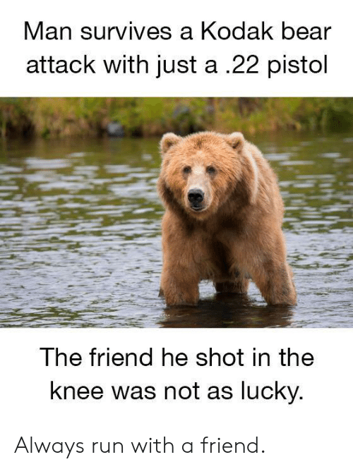 pistol: Man  survives a Kodak bear  attack with just a .22 pistol  The friend he shot in the  knee was not as lucky Always run with a friend.