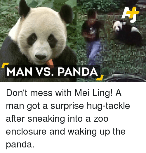 Memes, Ups, and Panda: MAN VS. PANDA Don't mess with Mei Ling!  A man got a surprise hug-tackle after sneaking into a zoo enclosure and waking up the panda.