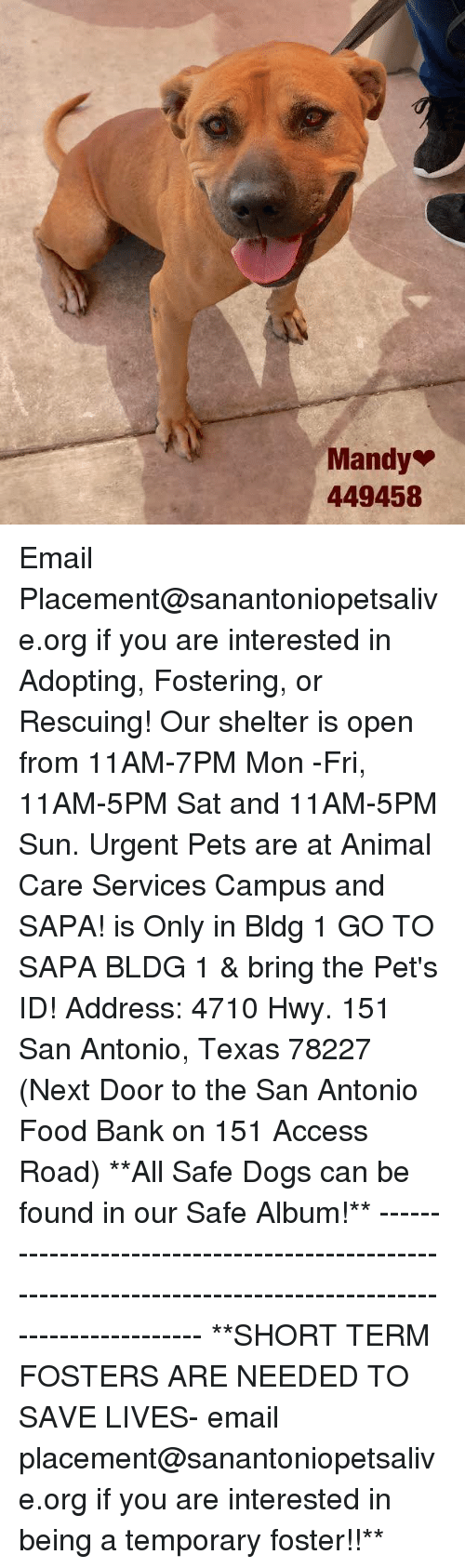 Dogs, Food, and Memes: Mandy  449458 Email Placement@sanantoniopetsalive.org if you are interested in Adopting, Fostering, or Rescuing!  Our shelter is open from 11AM-7PM Mon -Fri, 11AM-5PM Sat and 11AM-5PM Sun.  Urgent Pets are at Animal Care Services Campus and SAPA! is Only in Bldg 1 GO TO SAPA BLDG 1 & bring the Pet's ID! Address: 4710 Hwy. 151 San Antonio, Texas 78227 (Next Door to the San Antonio Food Bank on 151 Access Road)  **All Safe Dogs can be found in our Safe Album!** ---------------------------------------------------------------------------------------------------------- **SHORT TERM FOSTERS ARE NEEDED TO SAVE LIVES- email placement@sanantoniopetsalive.org if you are interested in being a temporary foster!!**