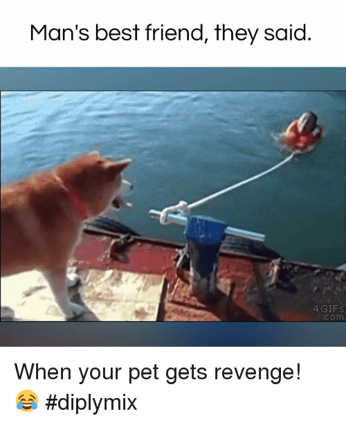 Memes, Revenge, and 🤖: Man's best friend, they said  4 GIFS  Com When your pet gets revenge! 😂 #diplymix