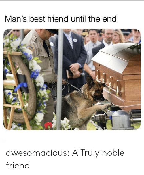 noble: Man's best friend until the end  IG THELIONLAW awesomacious:  A Truly noble friend