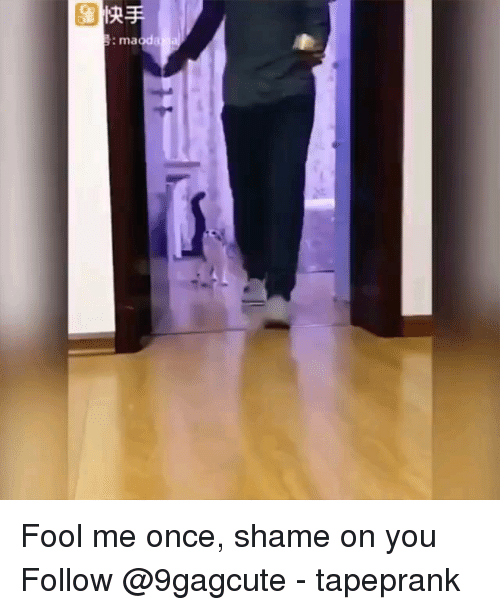 Memes, 🤖, and Once: : maoda Fool me once, shame on you Follow @9gagcute - tapeprank