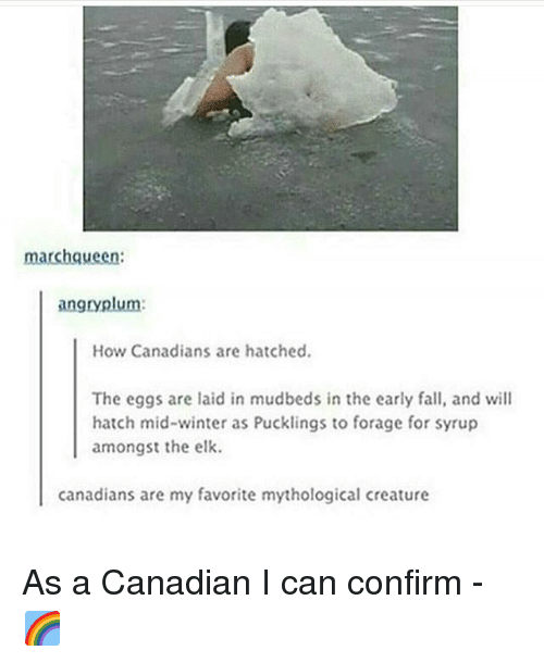 Fall, Memes, and Winter: marchqueen:  angryplum:  How Canadians are hatched.  The eggs are laid in mudbeds in the early fall, and will  hatch mid-winter as Pucklings to forage for syrup  amongst the elk  canadians are my favorite mythological creature As a Canadian I can confirm - 🌈