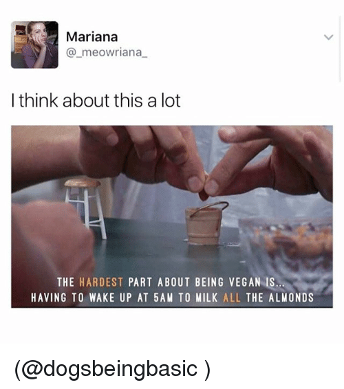 Funny, Meme, and Vegan: Mariana  a meowriana  I think about this a lot  THE  HARDEST  PART ABOUT BEING VEGAN IS  HAVING TO WAKE UP AT 5AM TO MILK  ALL  THE ALMONDS (@dogsbeingbasic )