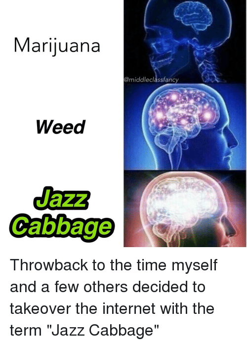 "Internet, Memes, and Weed: Marijuana  @middle class fancy  Weed  Cabbage Throwback to the time myself and a few others decided to takeover the internet with the term ""Jazz Cabbage"""