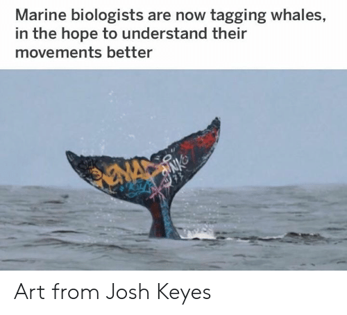 Tagging: Marine biologists are now tagging whales,  in the hope to understand their  movements better Art from Josh Keyes