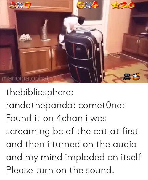 4chan: marioinatopha thebibliosphere:  randathepanda:  comet0ne: Found it on 4chan  i was screaming bc of the cat at first and then i turned on the audio and my mind imploded on itself   Please turn on the sound.