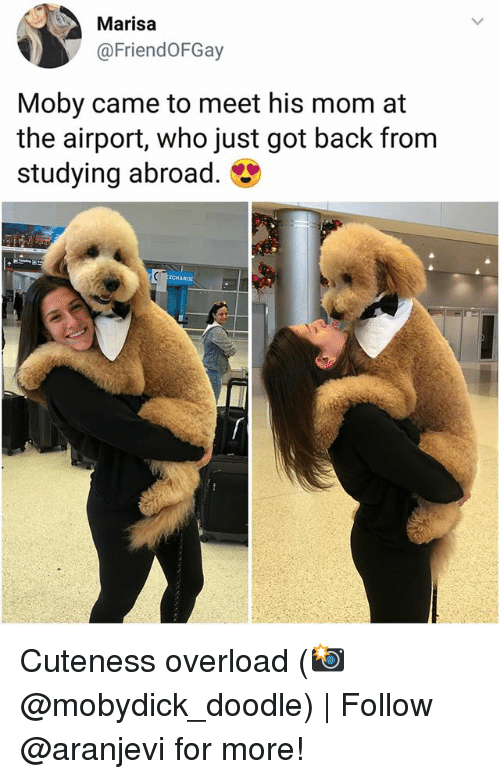 Memes, Doodle, and Mom: Marisa  @FriendoFGay  Moby came to meet his mom at  the airport, who just got back from  studying abroad. Cuteness overload (📸 @mobydick_doodle) | Follow @aranjevi for more!